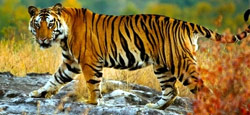 Coorg - Bandipur - Ooty - Coonoor Tour Package from Mangalore