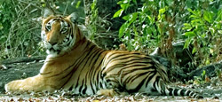 Sakleshpur - Chikmagalur Tour Package from Mangalore