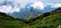 Coorg - Mysore - Ooty - Kodanad Tour Package from Mangalore