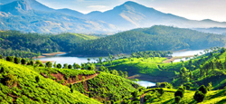 Coorg - Ooty - Coonoor - Munnar Tour Package from Mangalore