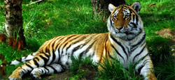 Coorg Hill Station Tour Package from Mangalore