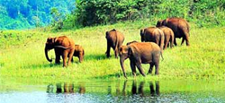 Coorg - Wayanad - Ooty - Munnar - Thekkady - Alappuzha Tour Package